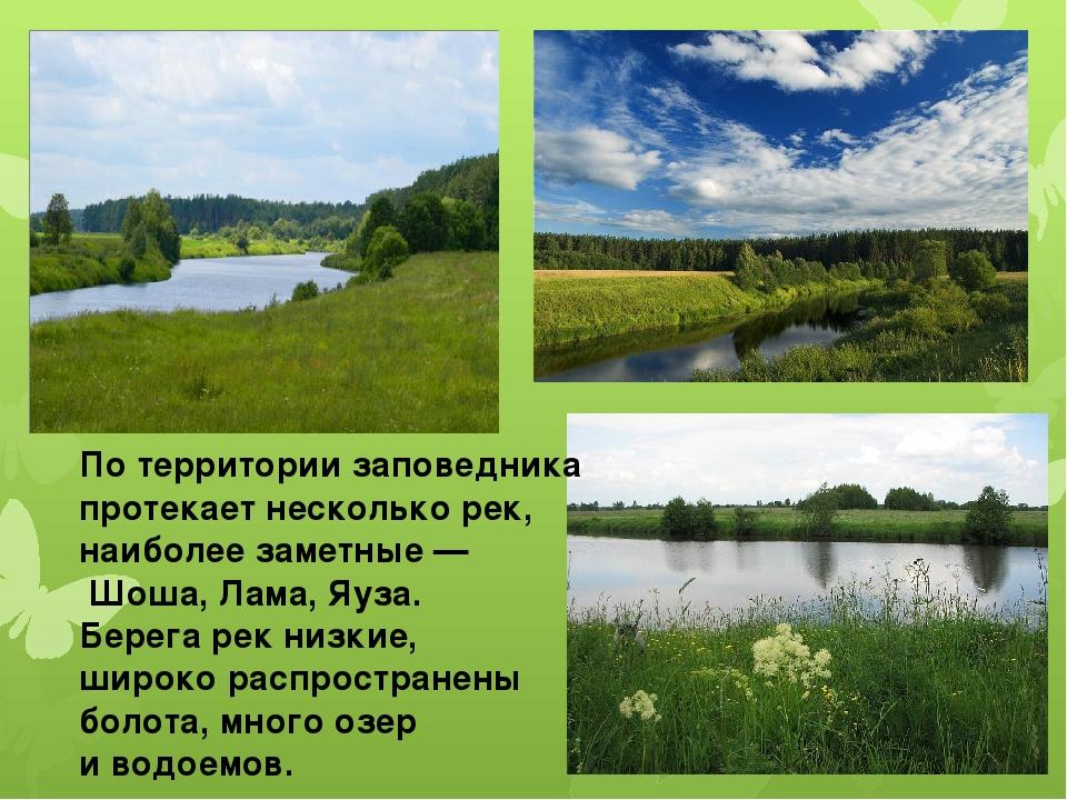 По территории заповедника протекает несколько рек, наиболее заметные — Шоша,...