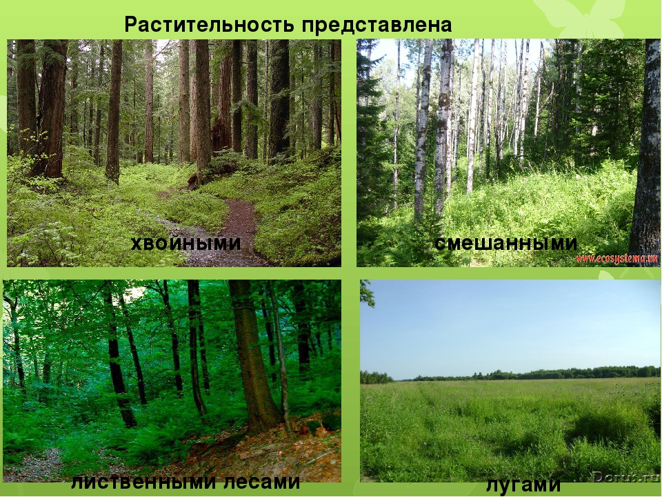Растительность представлена хвойными смешанными лиственными лесами лугами