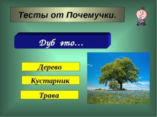 Тесты от Почемучки. Дуб это… Дерево Кустарник Трава