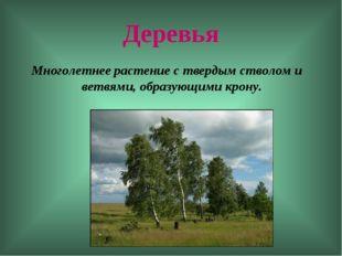 Деревья Многолетнее растение с твердым стволом и ветвями, образующими крону.
