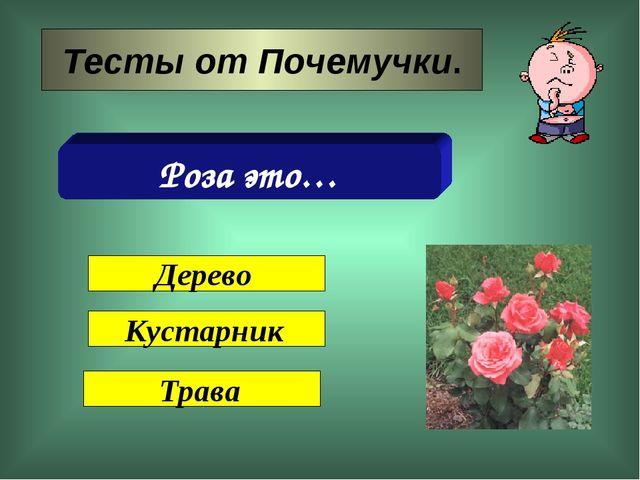 Тесты от Почемучки. Роза это… Дерево Кустарник Трава