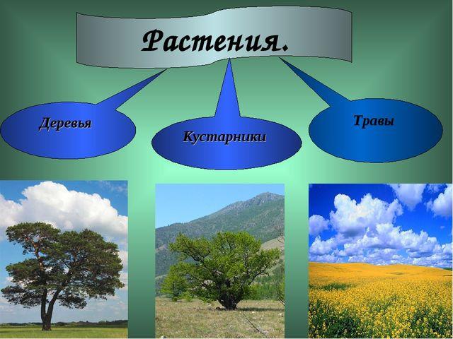 Растения. Деревья Травы Кустарники
