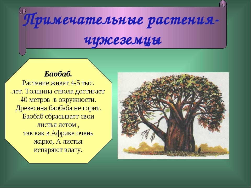 Баобаб. Растение живет 4-5 тыс. лет. Толщина ствола достигает 40 метров в окр...
