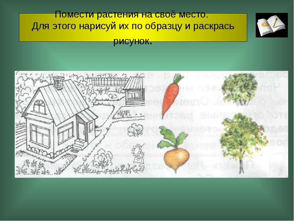 Помести растения на своё место. Для этого нарисуй их по образцу и раскрась ри...