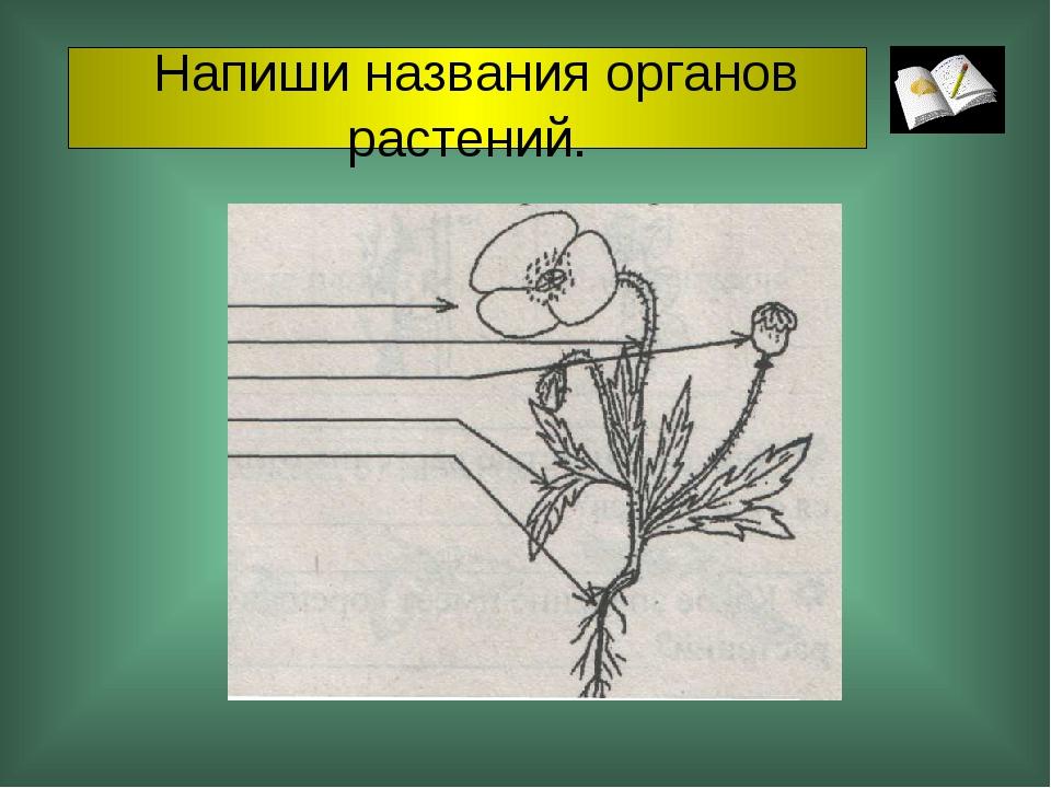 Напиши названия органов растений.