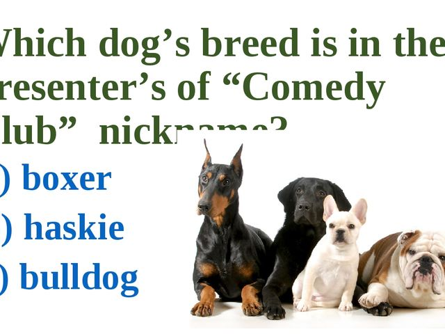 "Which dog's breed is in the presenter's of ""Comedy Club"" nickname? a) boxer b..."