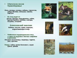 Обитатели лесов Правобережья Лоси, лисицы, куницы, кабаны, горностаи, зайцы-б