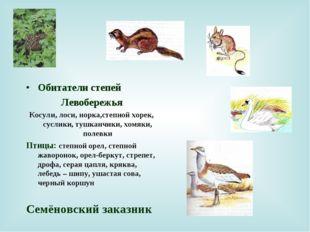 Обитатели степей Левобережья Косули, лоси, норка,степной хорек, суслики, тушк