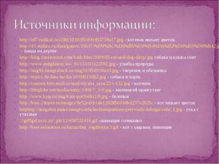 http://s07.radikal.ru/i180/1010/85/d90453718a17.jpg - котенок нюхает цветок h