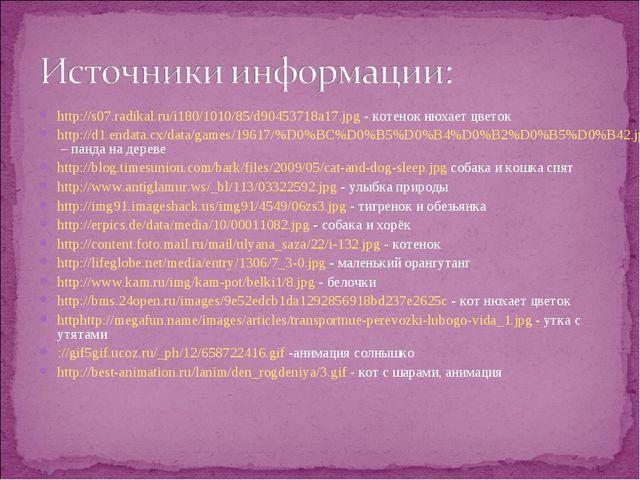 http://s07.radikal.ru/i180/1010/85/d90453718a17.jpg - котенок нюхает цветок h...