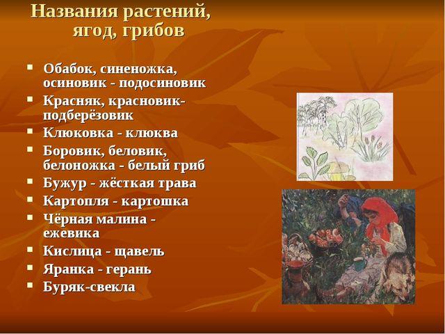 Названия растений, ягод, грибов Обабок, синеножка, осиновик - подосиновик Кра...