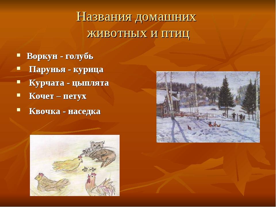 Названия домашних животных и птиц Воркун - голубь Парунья - курица Курчата -...