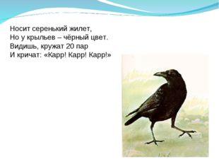 Носит серенький жилет, Но у крыльев – чёрный цвет. Видишь, кружат 20 пар И кр