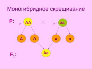 Моногибридное скрещивание а а А F1: P: ♀ ♂ АА аа А Аа