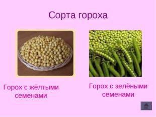 Сорта гороха Горох с жёлтыми семенами Горох с зелёными семенами