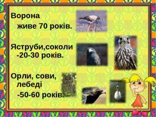 Ворона живе 70 років. Яструби,соколи -20-30 років. Орли, сови, лебеді -50-60