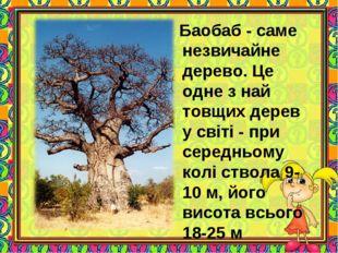 Баобаб - саме незвичайне дерево. Це одне з най товщих дерев у світі - при се