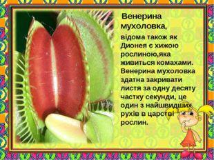 Венерина мухоловка, відома також як Дионея є хижою рослиною,яка живиться ком