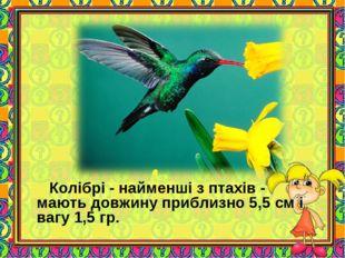 Колібрі - найменші з птахів - мають довжину приблизно 5,5 см і вагу 1,5 гр.