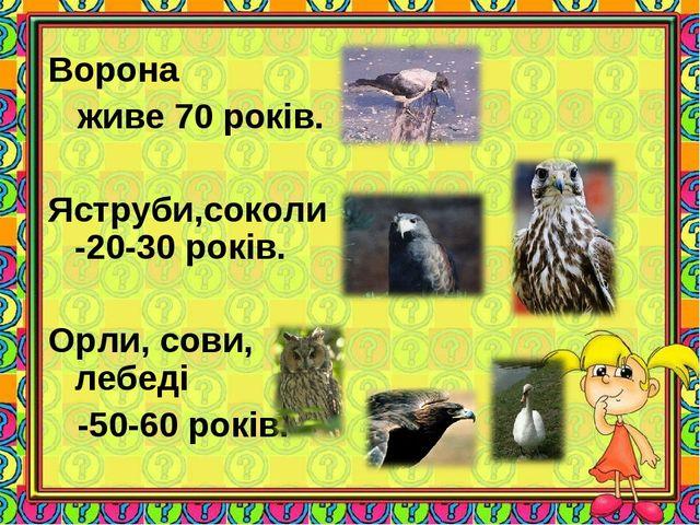 Ворона живе 70 років. Яструби,соколи -20-30 років. Орли, сови, лебеді -50-60...