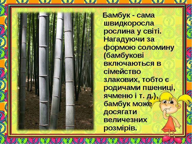 Бамбук - сама швидкоросла рослина у світі. Нагадуючи за формою соломину (бам...