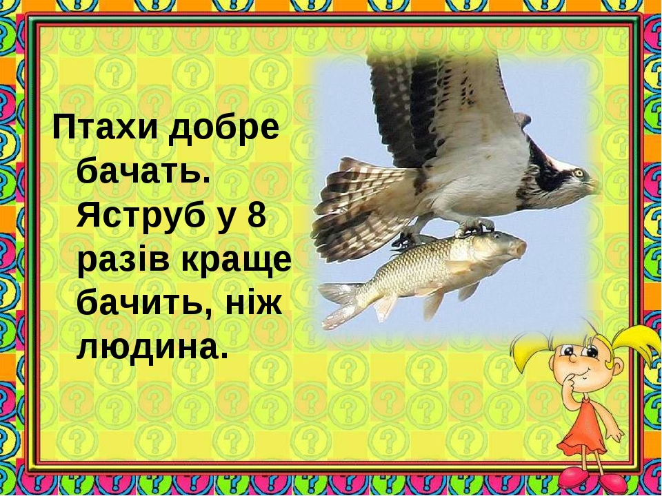 Птахи добре бачать. Яструб у 8 разів краще бачить, ніж людина.