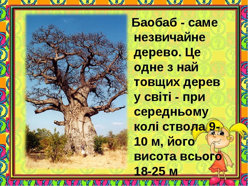 Баобаб - саме незвичайне дерево. Це одне з най товщих дерев у світі - при се...