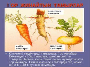 ҚОР ЖИНАЙТЫН ТАМЫРЛАР Көптеген өсімдіктердіңтамырлары қор жинайды. Екіжылдық