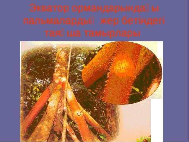 Экватор ормандарындағы пальмалардың жер бетіндегі таяқша тамырлары