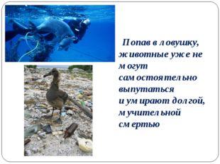 Попав вловушку, животные уже не могут самостоятельно выпутаться иумирают д