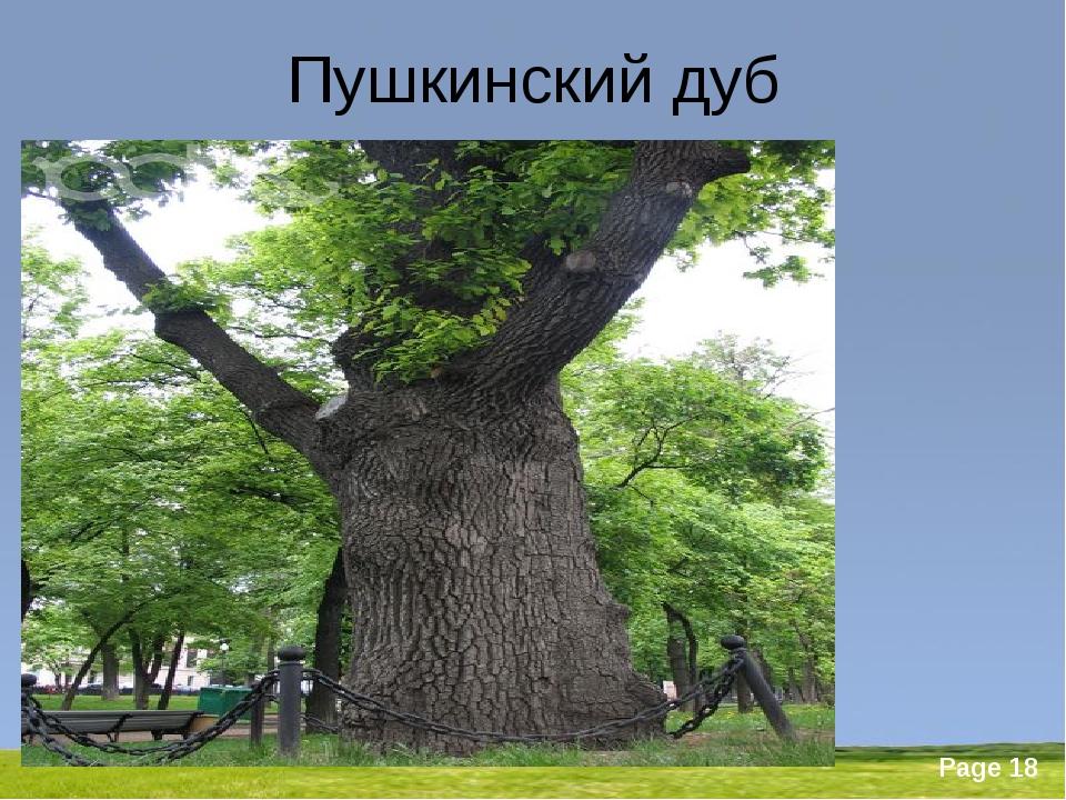 Пушкинский дуб Powerpoint Templates Page *