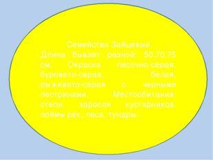 Семейство Зайцевые Длина бывает разной: 50,70,75 см. Окраска песочно-серая,