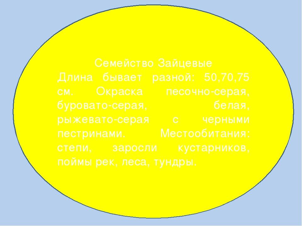 Семейство Зайцевые Длина бывает разной: 50,70,75 см. Окраска песочно-серая,...