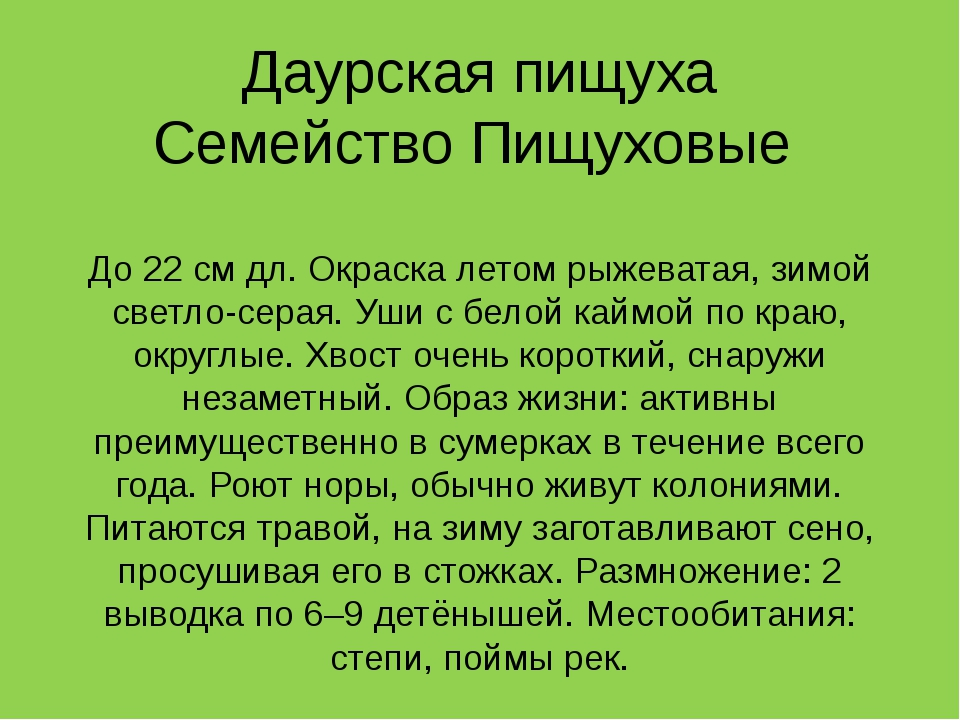 Даурская пищуха Семейство Пищуховые До 22 см дл. Окраска летом рыжеватая, зим...