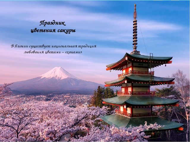 Праздник цветения сакуры В Японии существует национальная традиция любования...