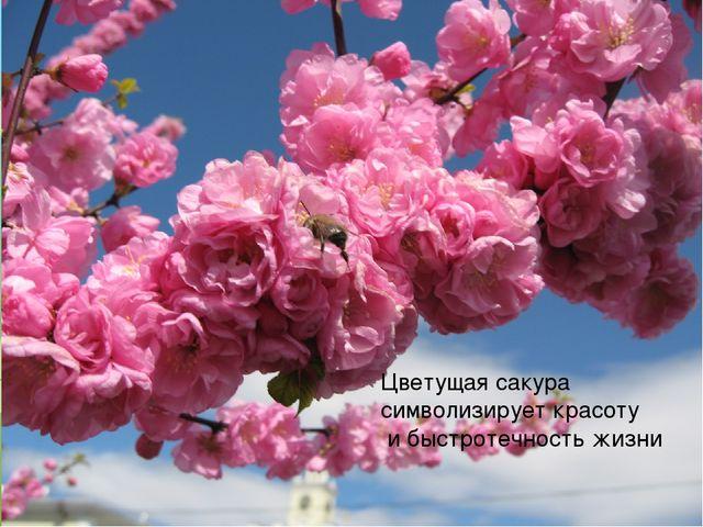Цветущая сакура символизирует красоту и быстротечность жизни