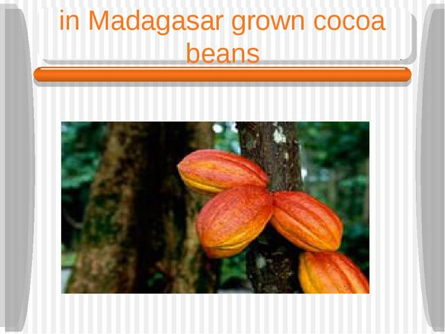 in Madagasar grown cocoa beans