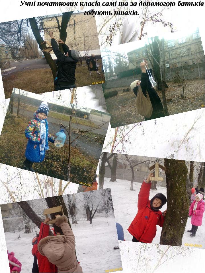 Учні початкових класів самі та за допомогою батьків годують птахів.