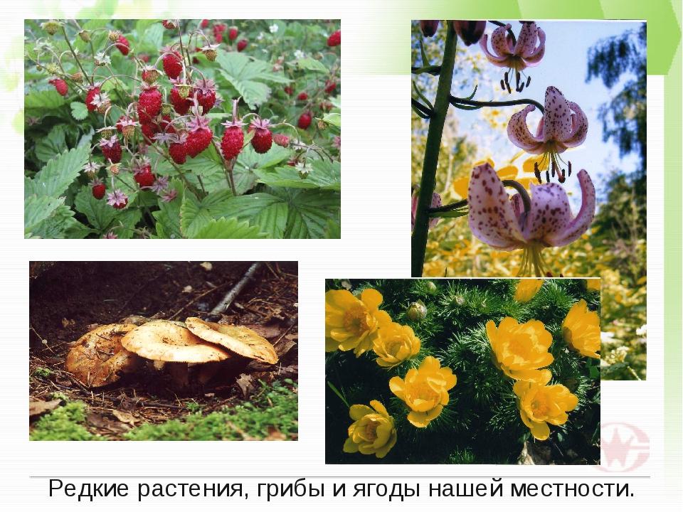 Редкие растения, грибы и ягоды нашей местности.