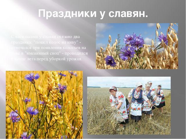 """Праздники у славян. С васильками у славян связано два праздника: """"пошел колос..."""