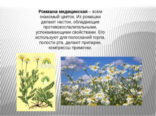 Ромашка медицинская– всем знакомый цветок. Из ромашки делают настои, обладаю