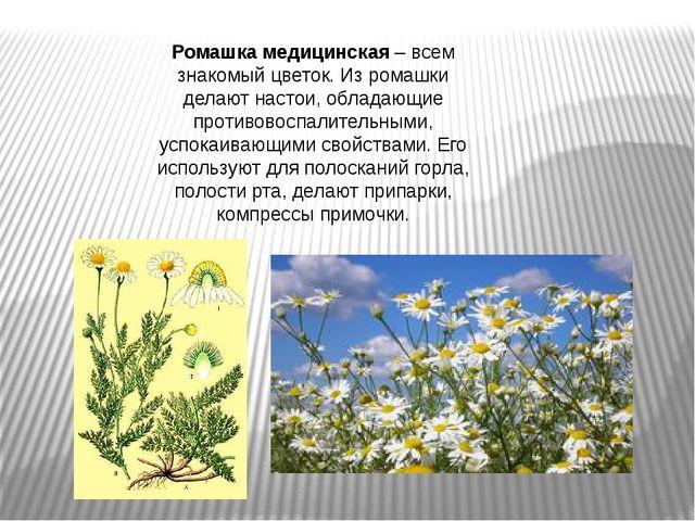 Ромашка медицинская– всем знакомый цветок. Из ромашки делают настои, обладаю...