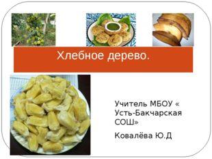 Хлебное дерево. Учитель МБОУ « Усть-Бакчарская СОШ» Ковалёва Ю.Д
