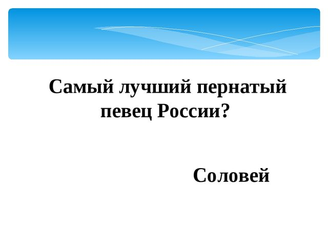 Самый лучший пернатый певец России? Соловей