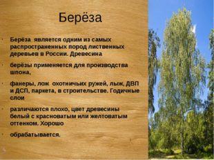 Берёза Берёза является одним из самых распространенных пород лиственных дерев