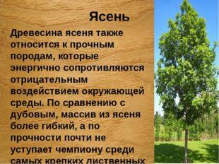 Ясень Древесина ясеня также относится к прочным породам, которые энергично со