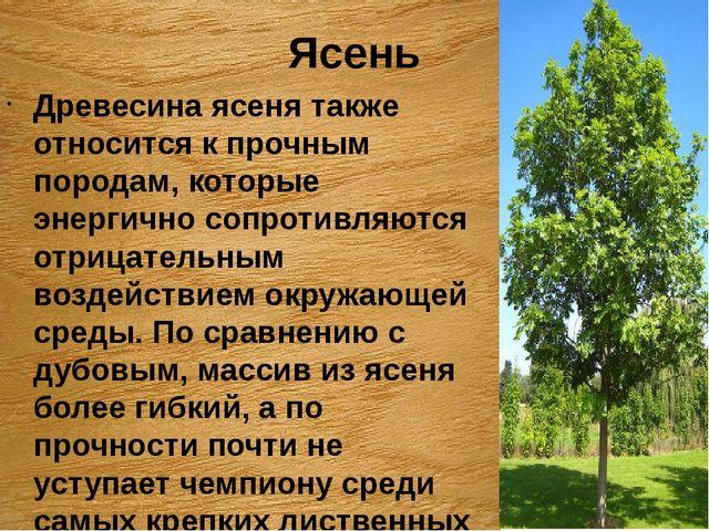 Ясень Древесина ясеня также относится к прочным породам, которые энергично со...
