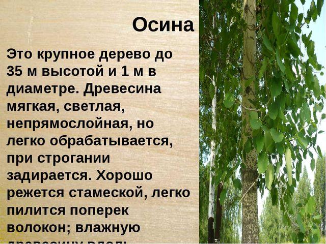 Осина Это крупное дерево до 35 м высотой и 1 м в диаметре. Древесина мягкая,...