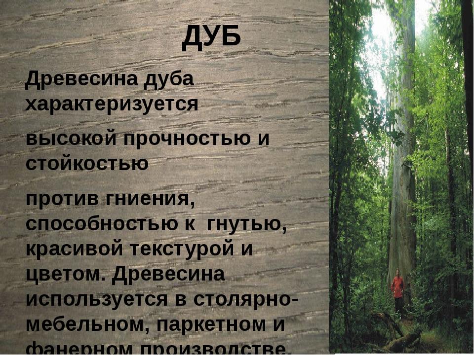 ДУБ Древесина дуба характеризуется высокой прочностью и стойкостью против гн...