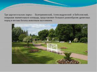 Екатерининский парк Три царскосельских парка - Екатерининский,Александровск